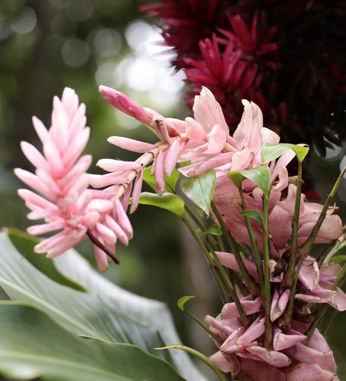 fleur femme sacre bio nature yoga&vedas