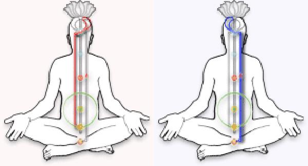 vajrini nadi chitrini nadi yoga&vedas