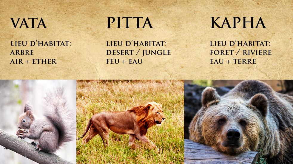 vata pitta kapha doshas animaux yoga&vedas