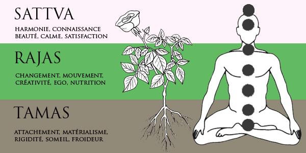 guna sattva rajas tamas chakras yoga&vedas copy