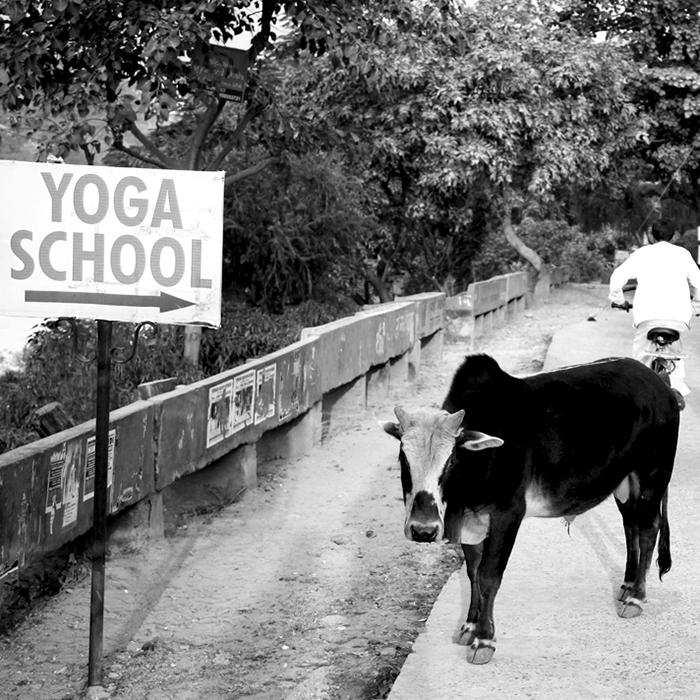 yoga school couverture nb