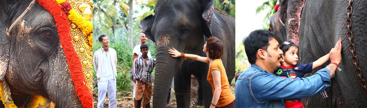 inde kerala elephant vacances