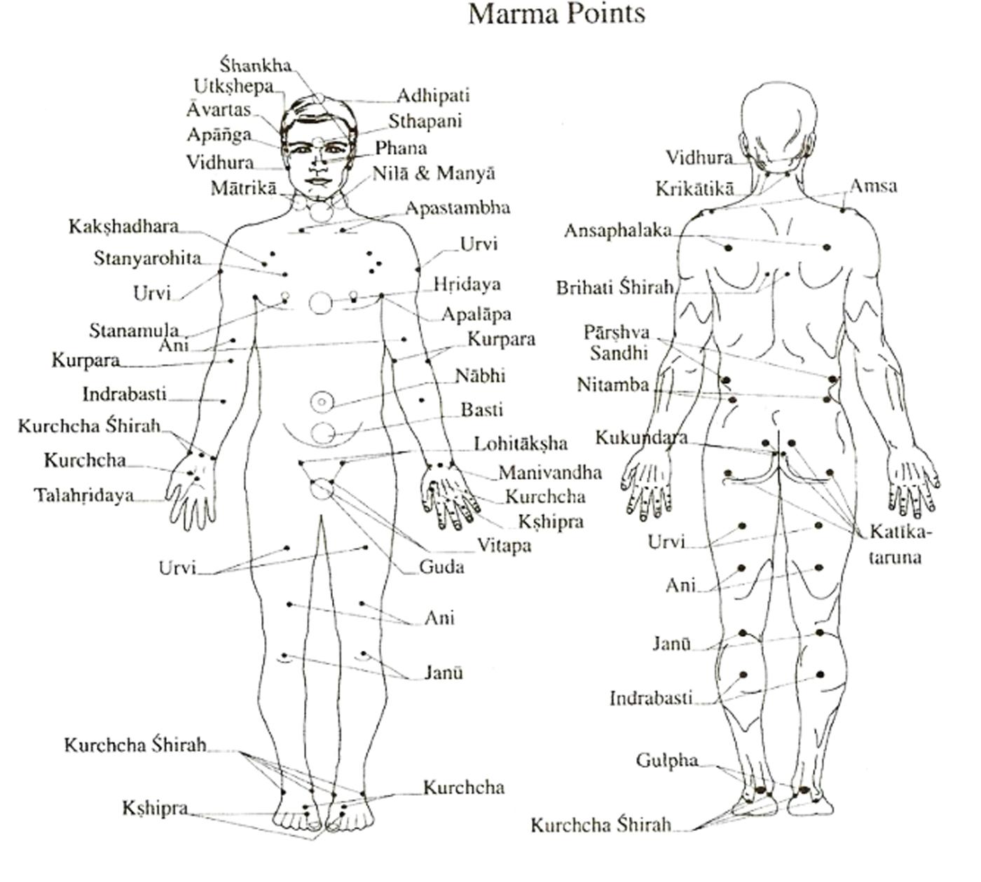 marmas points yoga&vedas