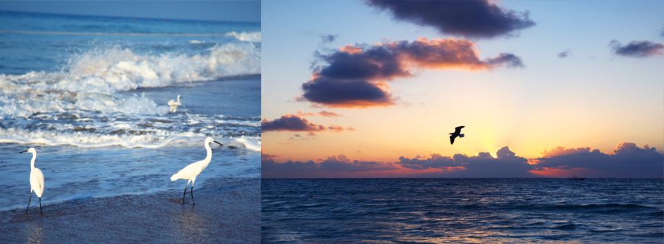 goa retraite seminaire yoga mer plage